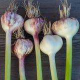 Fresh garlic Royalty Free Stock Images