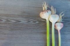 Fresh garlic Stock Images