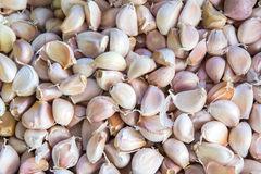 Fresh garlics for sale at market Royalty Free Stock Images