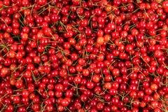 Free Fresh Gathered Cherries Background Stock Photos - 32724983