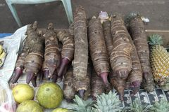 Asian potato. Fresh-gathered harvest of Asian exotic vegetables similar to potato royalty free stock image