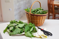 Fresh gathered nettles in basket Stock Image