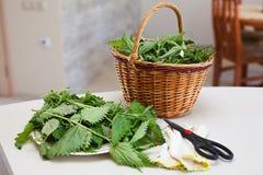 Fresh gathered nettles in basket. Fresh gathered nettles in a wicker basket on the table in the kitchen stock image