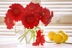 Fresh gerbera daisy in on table Royalty Free Stock Photos