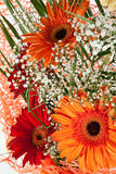 Fresh gerbera flower Royalty Free Stock Photo