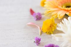 Fresh Gerbera flower colorful and Marguerite purple flowers frame composition on white background beautiful stock photo