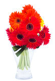 Fresh gerbera flowers posy  in vase Stock Image