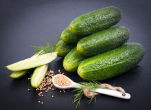 Fresh gherkin Stock Image
