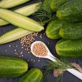 Fresh gherkin Stock Images