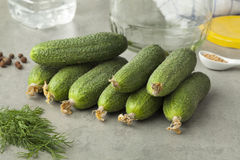 Fresh gherkins Royalty Free Stock Image