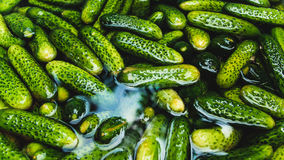 Fresh gherkins. Fresh small wet gherkins isolated in water Stock Photography