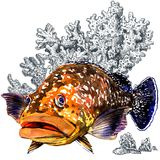 Fresh giant grouper sea fish with corals, isolated. Watercolor illustration on white background. Marine wallpaper Stock Photo
