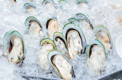 Fresh giant mussels on ice. In seafood market, Thailand Royalty Free Stock Photos