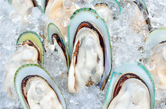 Fresh giant mussels on ice. In seafood market, Thailand Royalty Free Stock Photo