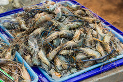 Fresh Giant prawn are on sale in the bazaar Stock Photos