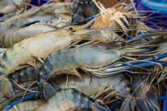 Fresh Giant prawn are on sale in the bazaar Royalty Free Stock Photos