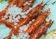 Fresh giant prawns on Ice Royalty Free Stock Photo