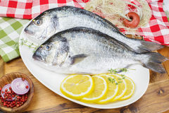 Fresh Gilt-head Bream with thyme and lemon. Gilt-head Bream. Mediterranean seafood concept. Fresh sea bream with thyme and lemon Royalty Free Stock Images