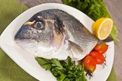 Fresh gilthead Stock Images