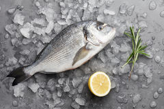 Fresh gilthead bream or dorado. Fresh dorado or gilthead bream cooking with lemon and rosemary on stone background Royalty Free Stock Images