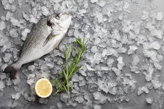 Fresh gilthead bream or dorado. Fresh dorado or gilthead bream cooking with lemon and rosemary on stone background Royalty Free Stock Photos