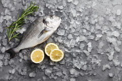 Fresh gilthead bream or dorado. Fresh dorado or gilthead bream cooking with lemon and rosemary on stone background Stock Images