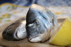 Fresh gilthead bream. Freash gilthead bream on a wooden cutting board Stock Photography