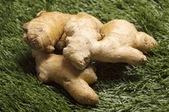 Fresh ginger on grass Royalty Free Stock Photos