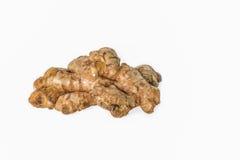 Fresh Ginger rhizome Stock Image