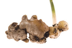 Fresh ginger root. plant Stock Image