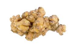 Ginger isolated on white background. Fresh ginger root or rhizome isolated on white background cutout stock images