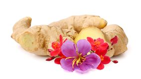 Fresh ginger on white background, herb medical concept. royalty free stock photos