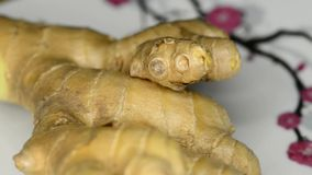 Fresh ginger root stock video