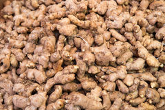 Fresh ginger roots Stock Image