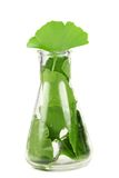 Fresh ginkgo biloba leaves Stock Image