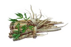 Fresh Ginseng Root. Fresh Ginseng Root and female ginseng (dong quai) leaves on white background Royalty Free Stock Photo