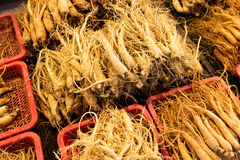 Fresh ginseng for sell Stock Photography