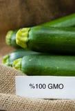 Fresh GMO zucchini Royalty Free Stock Photo