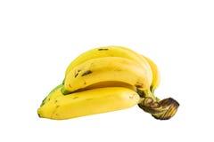 Fresh golden bananas bunch Royalty Free Stock Image