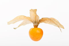 Fresh golden cape gooseberry, physalis Royalty Free Stock Image