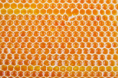 Fresh honey in comb Royalty Free Stock Images