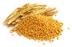 Fresh golden mustard with empty pods Royalty Free Stock Image