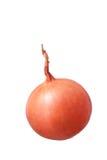 Fresh golden onion isolated on white background Royalty Free Stock Image