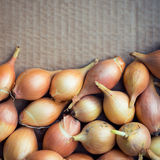 Fresh golden organic onions, clean eating concept Royalty Free Stock Photos