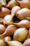 Fresh golden organic onions, clean eating concept Royalty Free Stock Photography