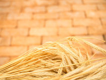 Fresh golden wheat barley ears with vintage brick background Royalty Free Stock Image