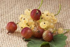 Fresh gooseberries of different colors. Whole fresh gooseberries with green leaves Stock Images
