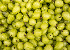 Fresh Gooseberries Royalty Free Stock Images