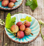 Fresh gooseberries and leaves in blue bowl Stock Photos