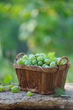 Fresh gooseberries in a wooden basket outdoor Royalty Free Stock Photography